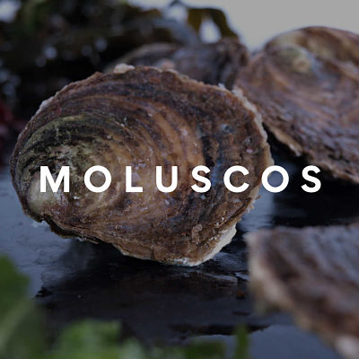 Comprar moluscos online